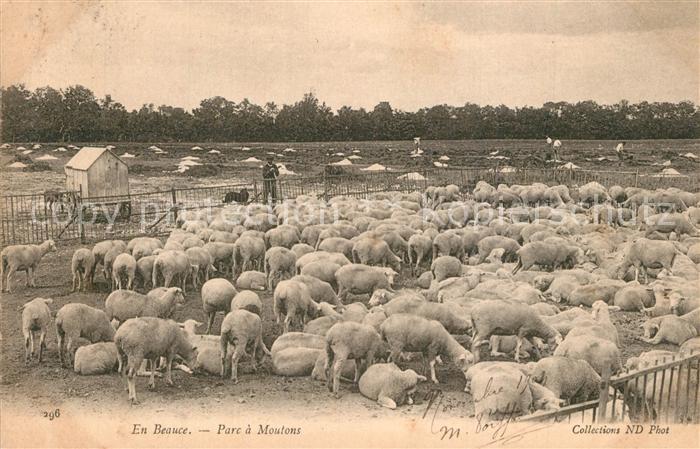 AK / Ansichtskarte Moutiers_Chartres Parc a moutons Moutiers Chartres 0