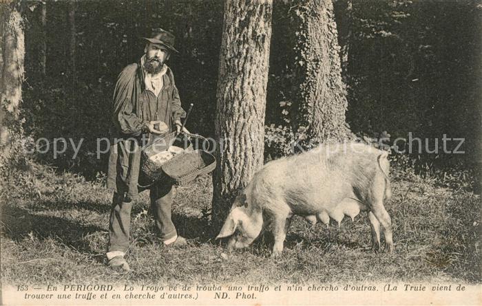 AK / Ansichtskarte Perigord La Truie vient de trouver une truffe Porc Perigord 0