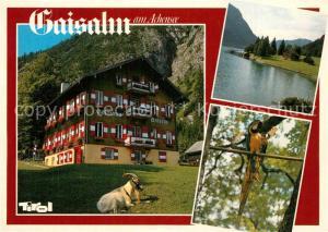 AK / Ansichtskarte Pertisau_Achensee Gaisalm  Pertisau Achensee