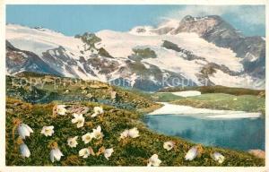 AK / Ansichtskarte Blumen Pulsatilla vernalis Fr?hlingskuhschelle Engadin Berninapass