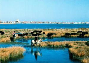 AK / Ansichtskarte Les_Saintes Maries de la Mer Manade Camargue Stierherde Spanische Pferde Les