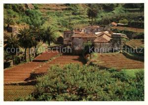 AK / Ansichtskarte Vallehermoso Cultivo de platanos Bananenanbau Vallehermoso