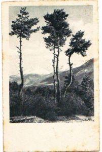 32042,AMAG 40723 SCHÖNE LANDSCHAFT 1940