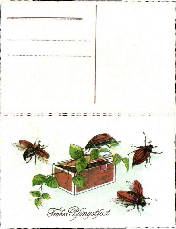 52028,Pfingsten Maikäfer sammeln Blätter