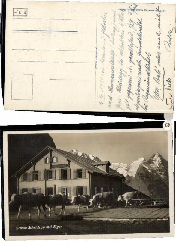 60870,Grosse Scheidegg m. Eger Kühe Kuh  1930