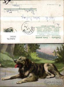 165262,Hund liegend Weg Bäume