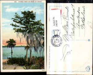 198749,Florida Cypress Trees and Moss Baum