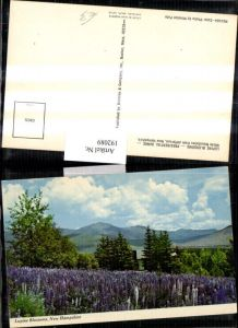 192089,New Hampshire White Mountains from Jefferson Lupine Blossoms Partie