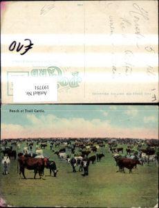 193751,Tier Bunch of Trail Cattle Rinder Kühe Stiere
