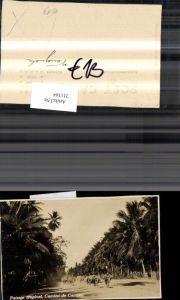211364,Venezuela Camino de Campo Paisaje tropical Straßenansicht Palmen