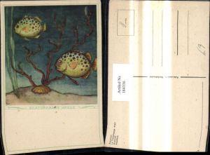 184336,Künstler Ak Scatophagus Argus Fisch Fische Argusfisch Muschel