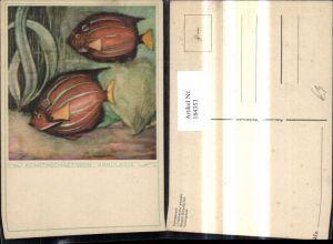 184353,Künstler Ak Acanthochaetodon Annularis Fisch Fische Köningsfisch