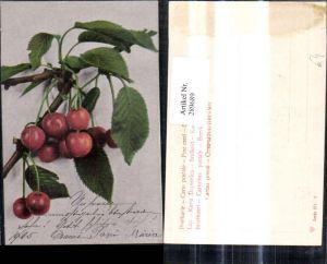 289689,Früchte Kirschen Zweig Obst