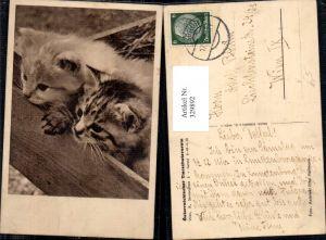 329892,Katzen Katzenkinder i. Holzkiste pub Österreichischer Tierschutzverein