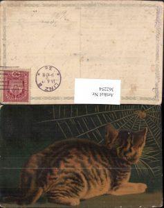 362254,Künstler Ak Tiere Katze sitzt vor Spinnennetz Spinne