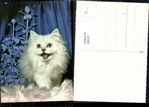 388559,Tiere Weiße Katze auf Fell sitzend Blumen