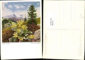 403291,Künstler AK Arnulf Erich Stegmann Blumen am Hang Schlüsselblume Bergkulisse