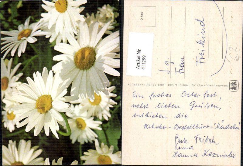 411299blumen Margeriten Detailansicht Blüten Pub Sos Kinderdorf O 769