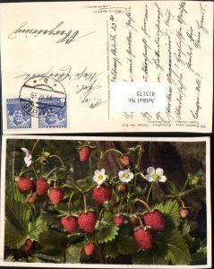 413175,Fragaria vesca Walderdbeere Erdbeeren Früchte