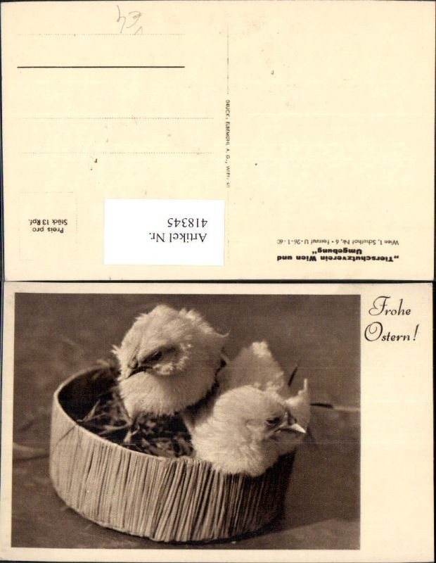 418345,Küken i. Nest Vogel Vögel Frohe Ostern pub Tierschutzverein
