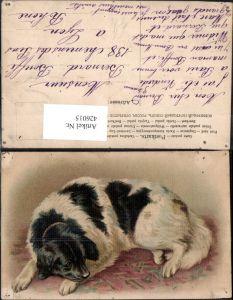 426015,Künstler Ak Hund a. Teppich liegend