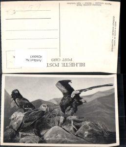 426097,Tiere Vögel Helotarsus ecaudatus Dand Bateleur Aigle bateleur Greifvogel Schlange