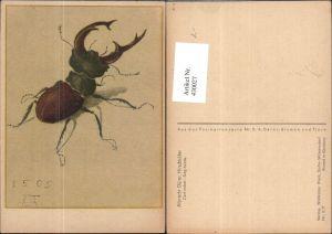 430027,Künstler Ak Albrecht Dürer Hirschkäfer Insekten Tiere