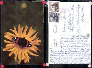 430045,Tiere Insekt Admiral Schmetterling auf Gelber Blume Blüte pub SOS Kinderdorf
