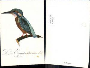 430053,Künstler Ak Der gemeine Eisvogel sitzt auf Ast Tiere Vögel