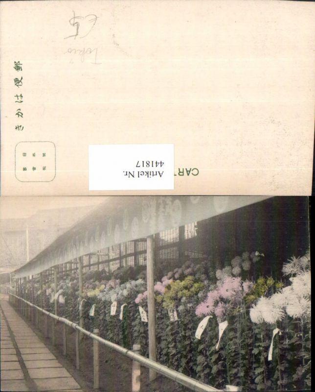441817,Japan Tokyo Tokio Blumen Pflanzen