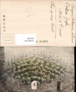 441818,Japan Tokio Tokyo Pflanzen