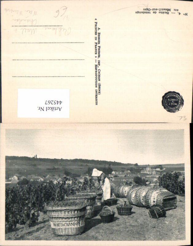 445267,Reklame Moet & Chandon Mesnil-sur-Oger Wein Sekt Weinernte