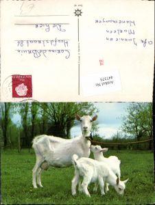 447375,Tiere Ziegen Zicklein