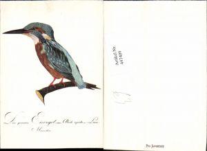 447409,Künstler AK Tier Eisvogel Vogel