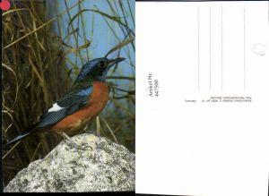 447500,Tier Eisvogel Vogel
