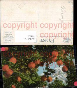 464023,Oranges and Snow a Midwinter Scene in California USA Orangen Früchte Obst