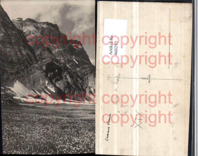 460297,Foto AK Flims Krokus Wiese Bergkulisse Kt Graubünden pub Foto M. Reiter