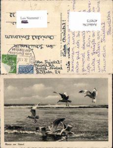 479573,Möwen a. Strand Vogel Vögel