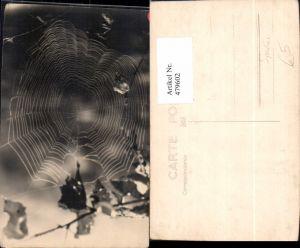 479602,Foto Ak Spinne Spinnennetz Netz Blätter Zweig