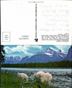 479615,Athabaska River Canadian Rockies Ziegen