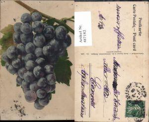 487182,Weintraube Rebe Blau Trauben Früchte Obst pub Martin Rommel Co 718