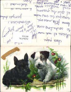 487316,Künstler Ak Hunde m. Frosch Blumen Bonne Fete