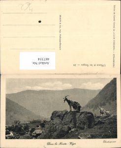 487354,Dans les Hautes Vosges Ziegen Bergziegen