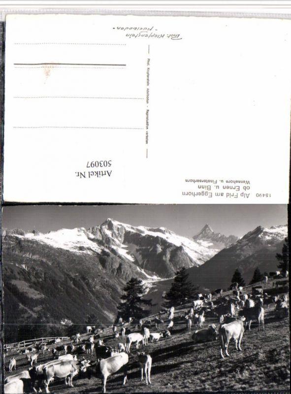 503097,Alp Frid am Eggerhorn b. Ernen Binn Rinder Bergkulisse Kt Wallis