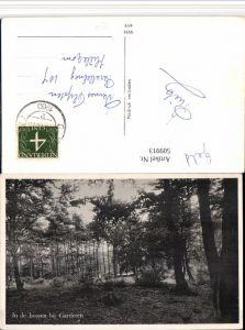 509913,Netherlands Garderen In de bossen Wald Partie
