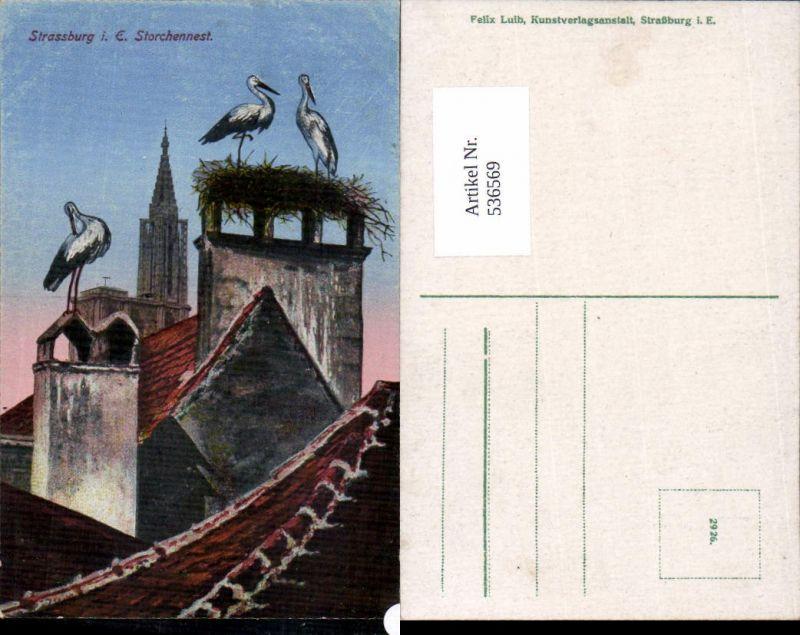 536569,Tiere Storch Störche Strassburg Strasbourg