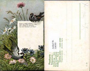 536593,Tiere Vogel Vögel Blumen