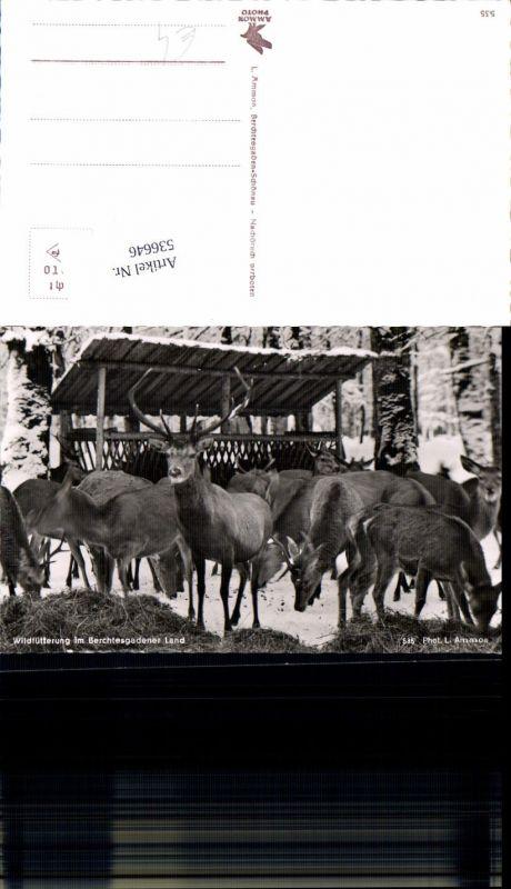 536646,Tiere Berchtesgaden Wildfütterung Hirsch Rehe Reh