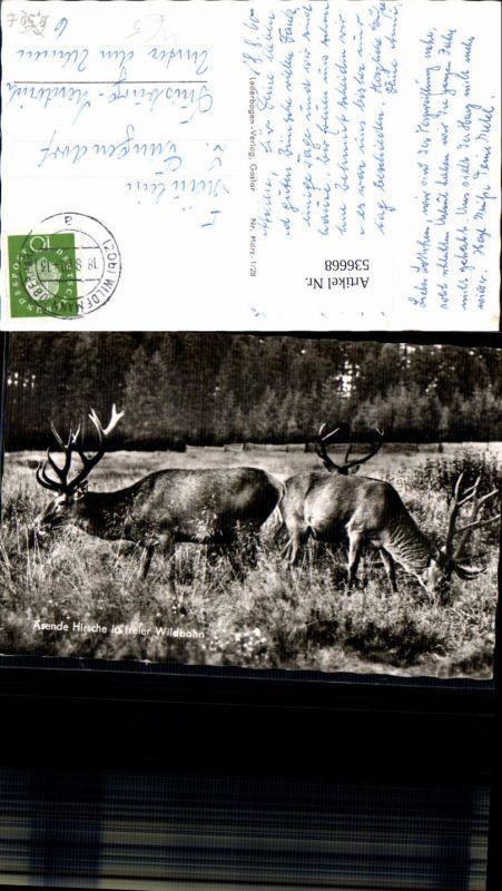 536668,Tiere Hirsche Hirsch Jagd