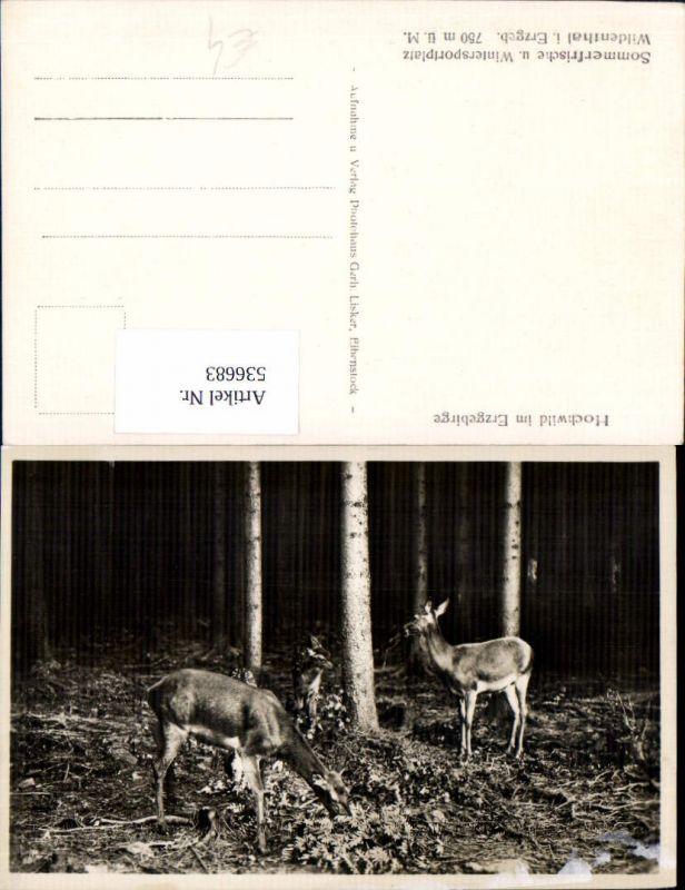 536683,Tiere Rehe Reh Wild Jagd Hochwild im Erzgebirge